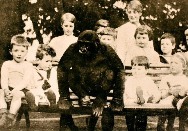A misteriosa história do gorila que foi criado como menino numa vila inglesa, bebia chá e ia à escola