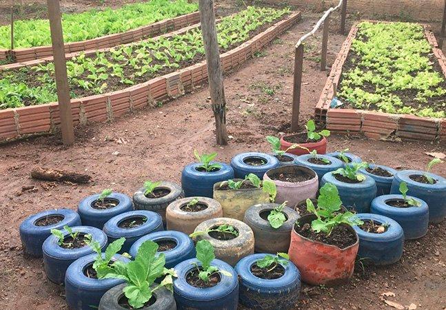 Em Palmas, essa horta cultivada por alunos ajuda a abastecer nove escolas