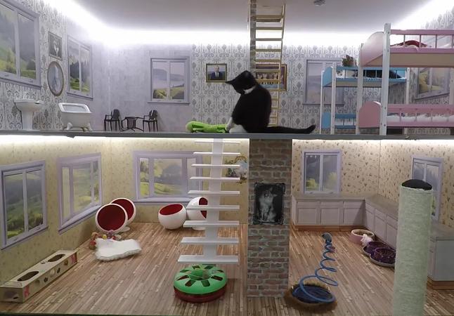Kattarshians: este reality show de gatos vai grudar seu olhos na tela