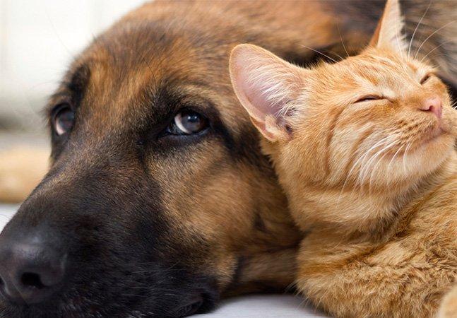 Câmara de SP aprova projeto que proíbe exterminar cães e gatos por zoonoses