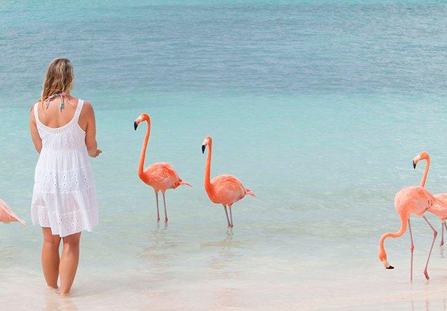 Esta praia em Aruba é repleta de simpáticos flamingos