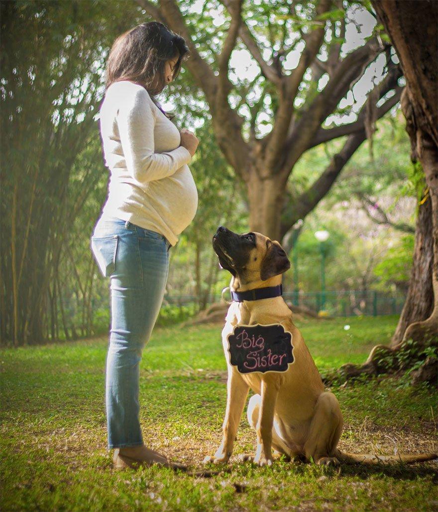 pregnant-couple-dogs-photoshoot-18