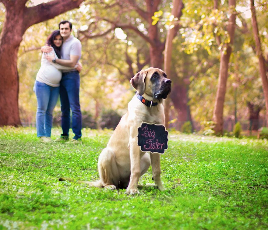 pregnant-couple-dogs-photoshoot-6