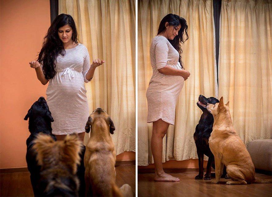 pregnant-couple-dogs-photoshoot-7