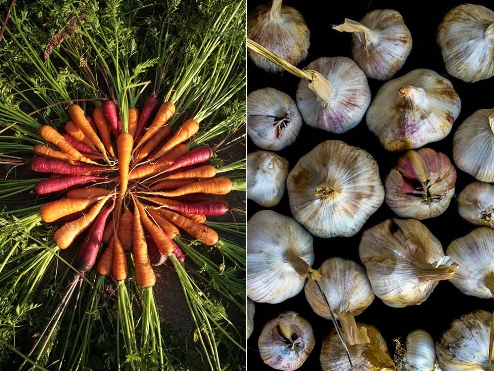 06-carrots-garlic