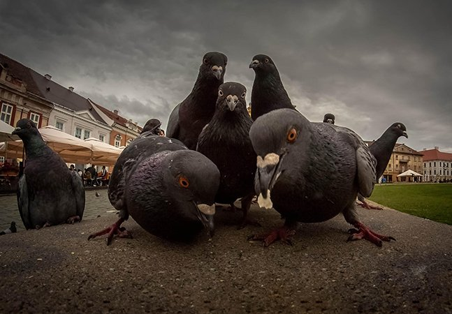 As encantadoras poses destes animais ao serem fotografados seriam perfeitas para capas de álbuns