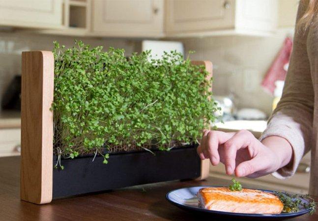 Mini jardim portátil produz brotos comestíveis em apenas 10 dias