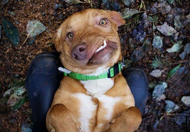 Você precisa conhecer Picasso, o maravilhoso cachorro que ninguém queria e que agora faz sucesso na web