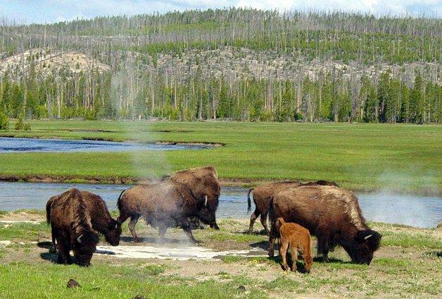 YellowstoneParkSons11