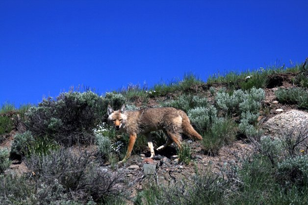 YellowstoneParkSons8