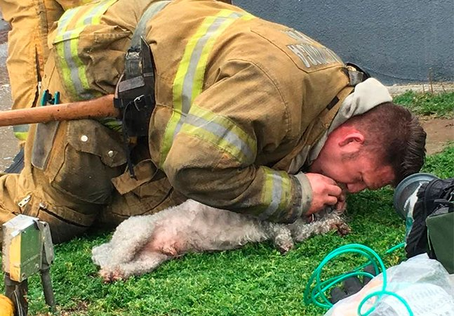 Respiração boca-a-focinho: como um bombeiro salvou a vida de um cachorro