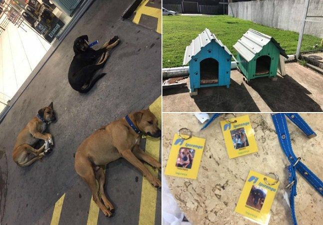 Novo proprietário transforma posto de combustível do RS em lar de animais de rua que viviam por ali