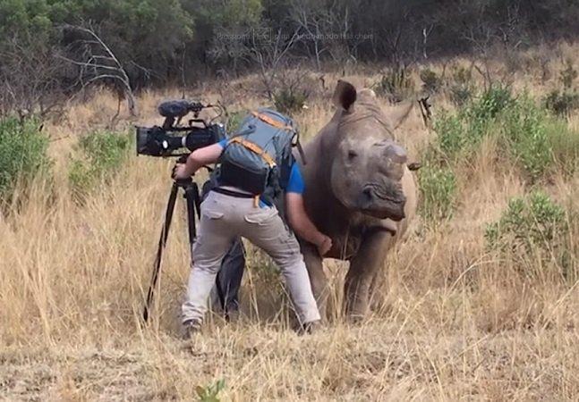 O momento de tensão em que este rinoceronte andou até o camera man teve um desfecho inesperado