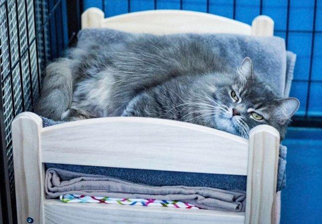 Ikea doa camas de bonecas para abrigo de gatinhos e as fotos são apaixonantes