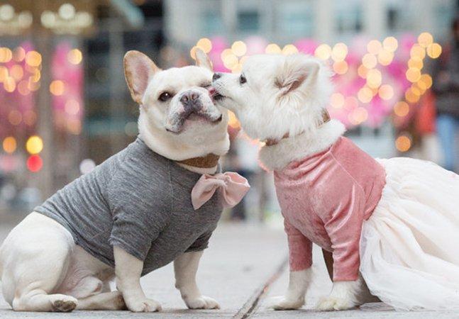 Não estamos sabendo lidar com a fofura desse álbum de noivado de dois cachorros