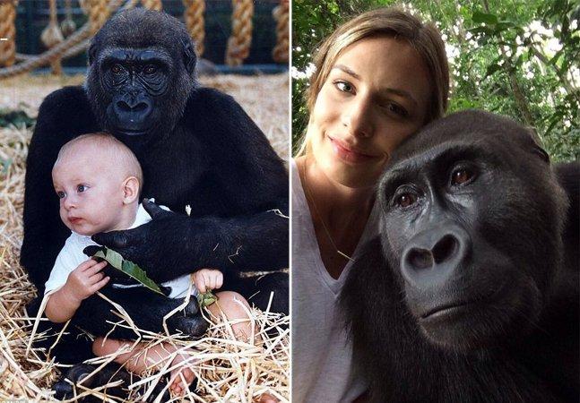 O comovente reencontro da jovem que cresceu entre gorilas com seus amigos da floresta