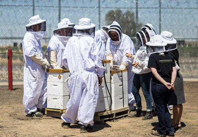 Como presidiários estão ajudando a conter o grave sumiço das abelhas nos EUA