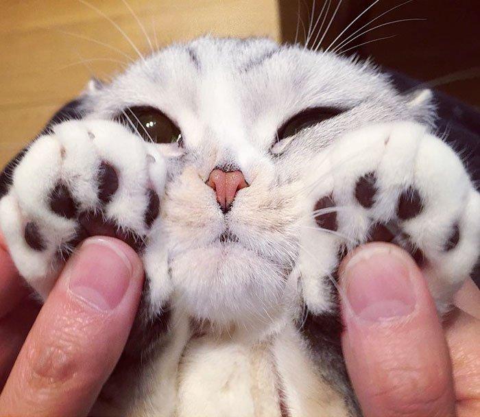 adorable-big-eyed-hana-kitty-101