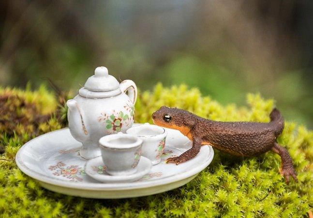 Ela fez uma festa do chá com vários dos pequenos animais que habitam seu jardim – e foi lindo