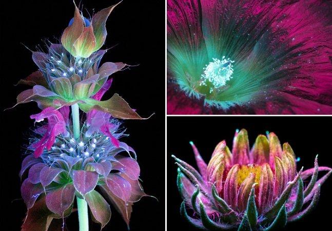 Fotógrafo capta o brilho e a luz invisível que as plantas emitem