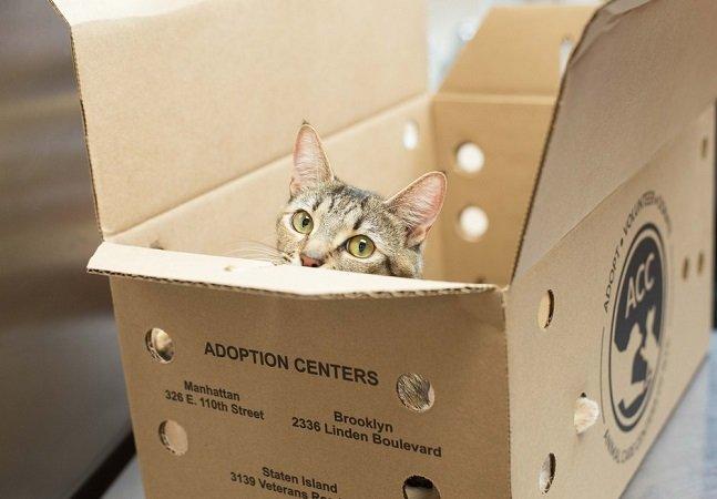 Além de amamentar seus filhotes, essa gatinha guerreira adotou as ninhadas de outras duas gatas