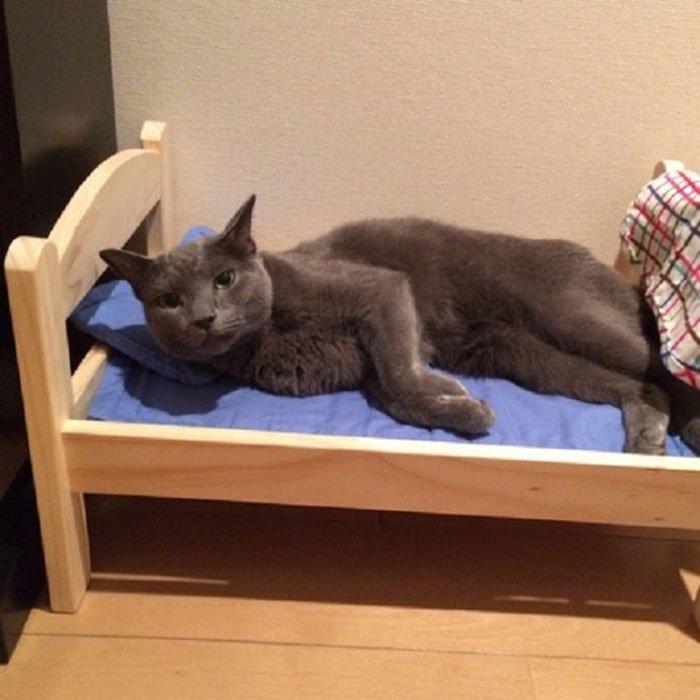 ikea-donates-doll-beds-shelter-cats-6