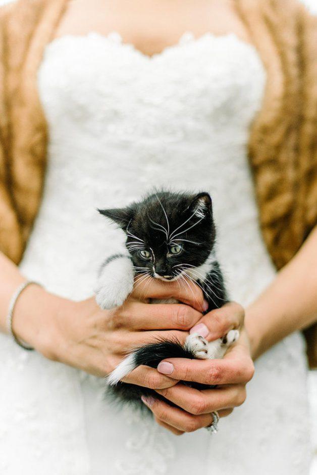kitten-wedding-4