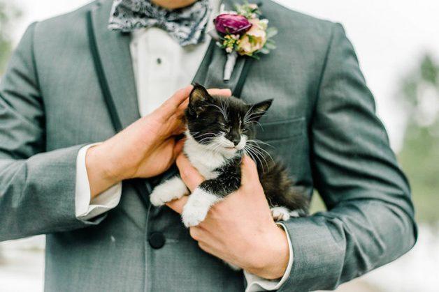 kitten-wedding-5