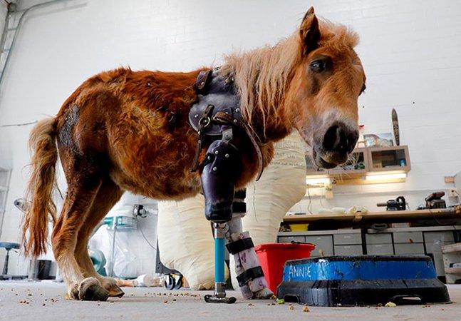 O Dr. Doolittle da vida real, que oferece próteses para que os animais amputados vivam melhor
