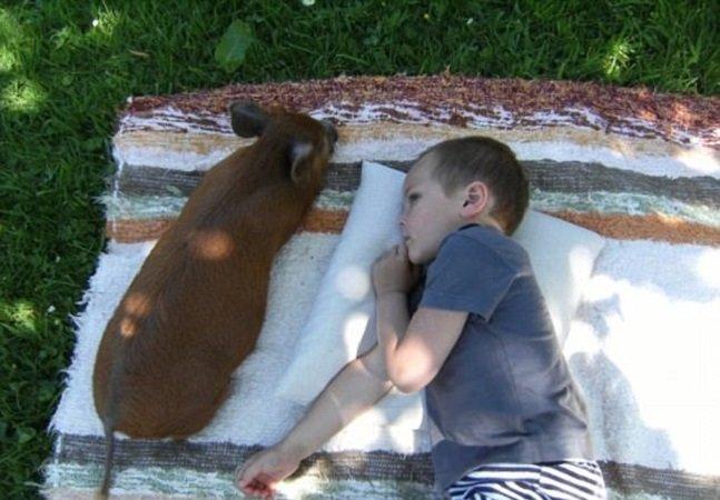 Como um porquinho transformou a vida deste garoto autista