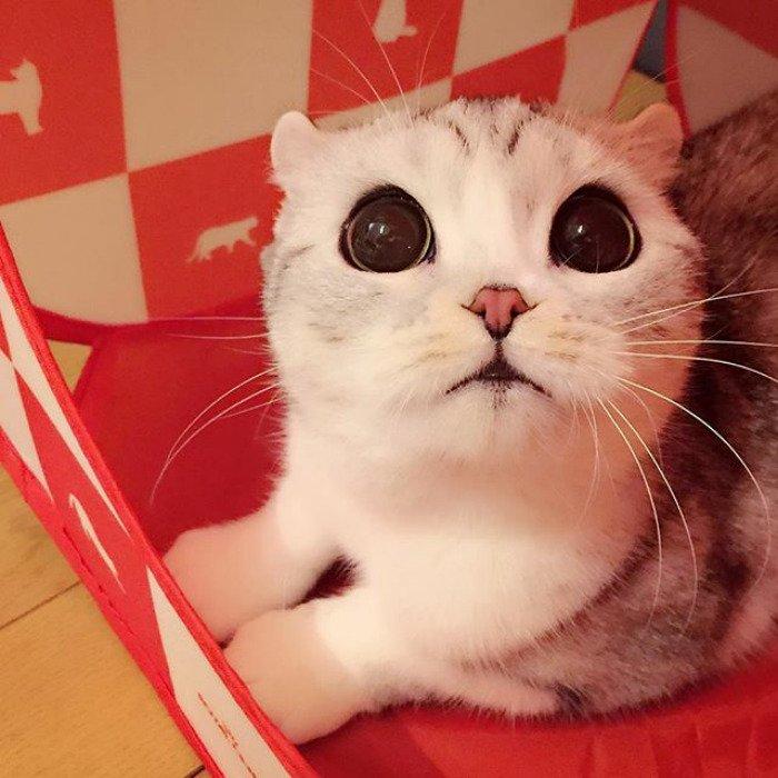 taken-byhana__kitty-1-png__700