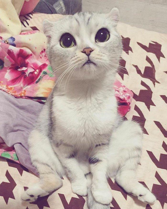 taken-byhana__kitty-16-png__700