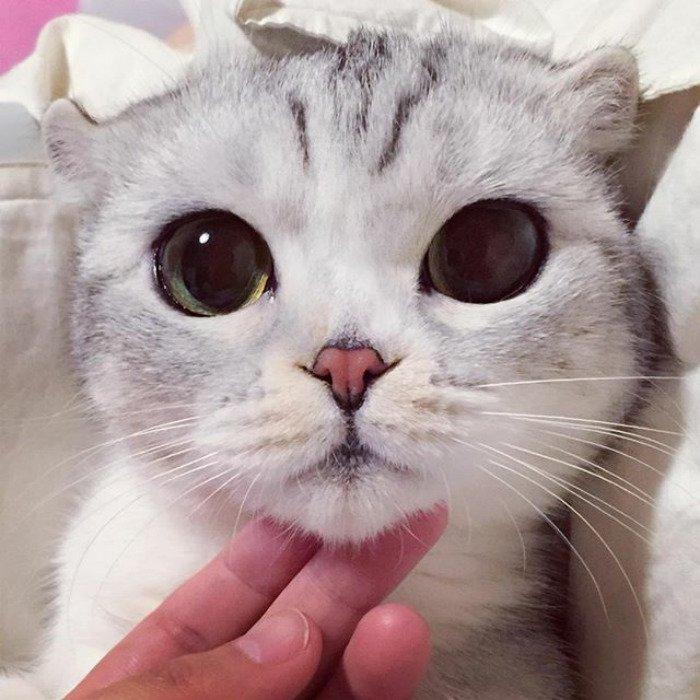 taken-byhana__kitty-2-png__700
