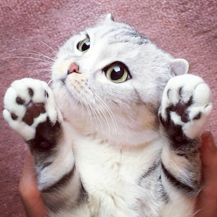 taken-byhana__kitty-30-png__700