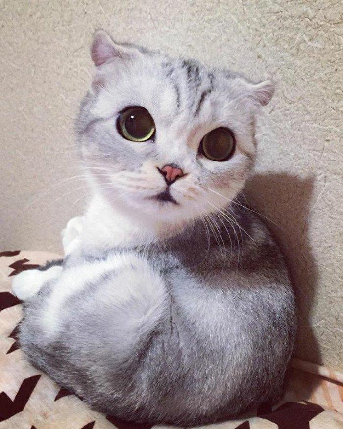 taken-byhana__kitty-34-png__700