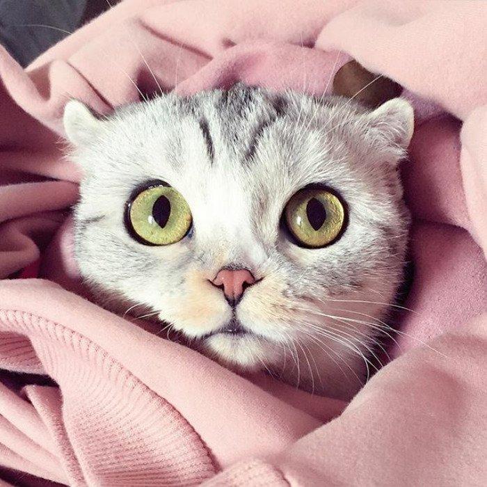 taken-byhana__kitty-44-png__700