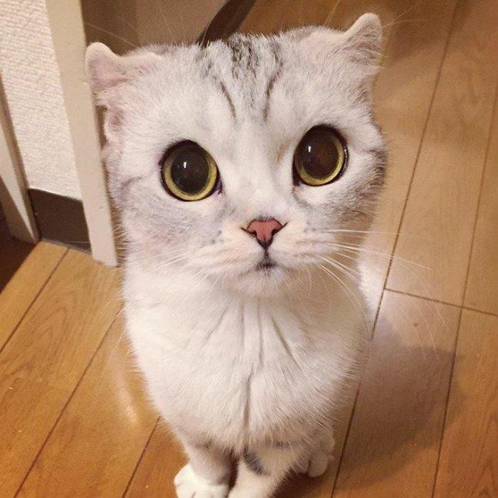 taken-byhana__kitty-6-png__700