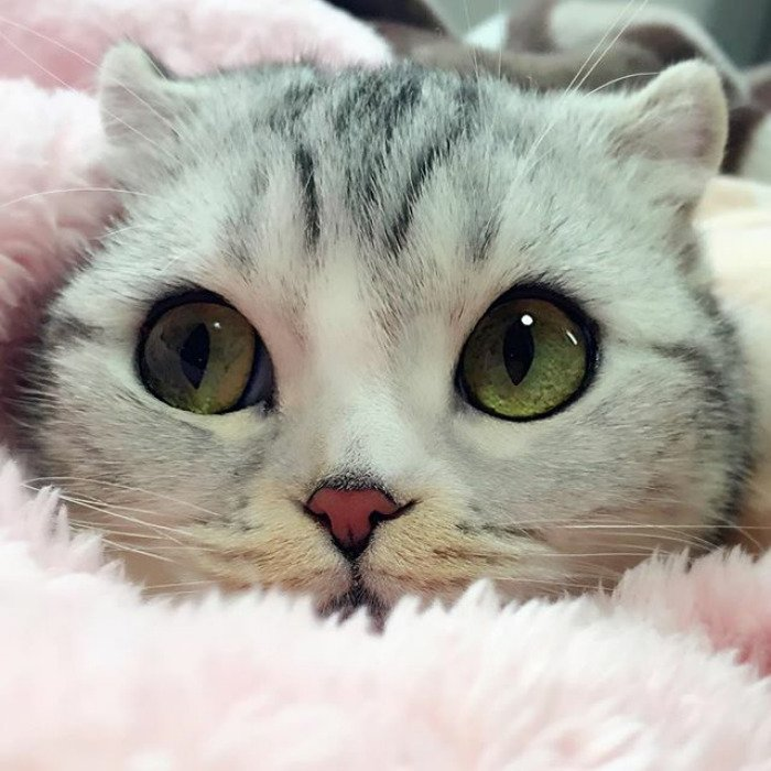 taken-byhana__kitty-69-png__700