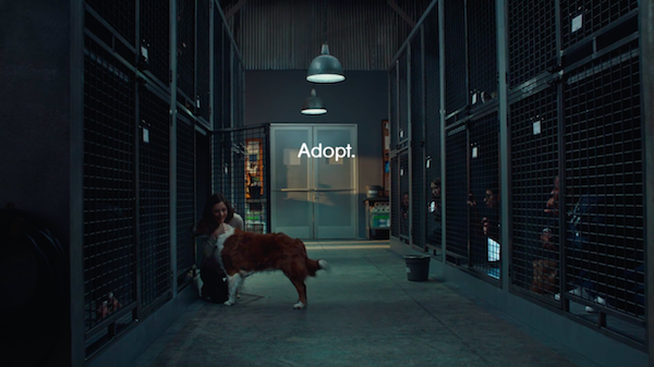 4-PickMe-PetAdoption-Ad-Pedigree-Dogs