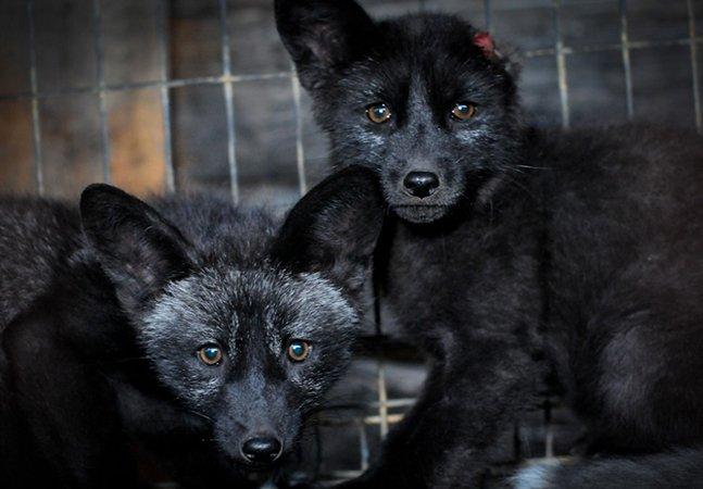 Fotógrafa mostra o sofrimento de animais usados para fazer roupa em alerta impossível de ignorar