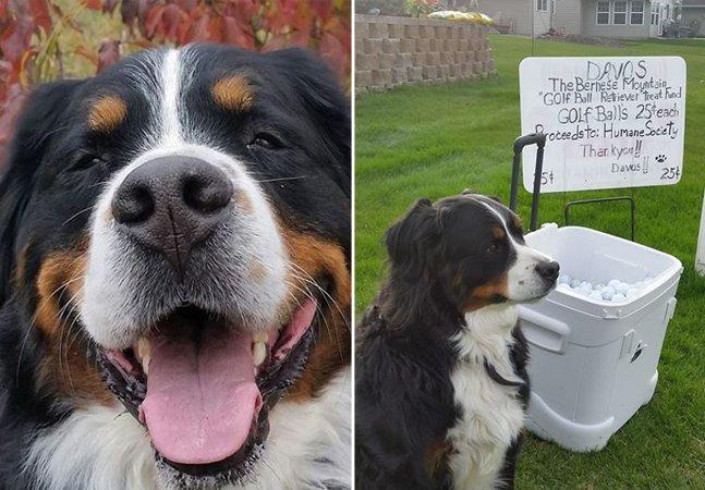 Como este cão está usando seu talento farejador para ajudar outros pets