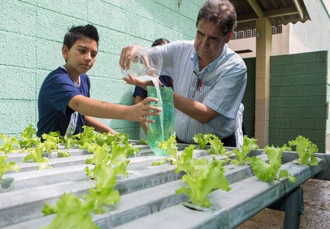 A escola pública de SP que tem sua própria horta hidropônica e que usa os alimentos na merenda