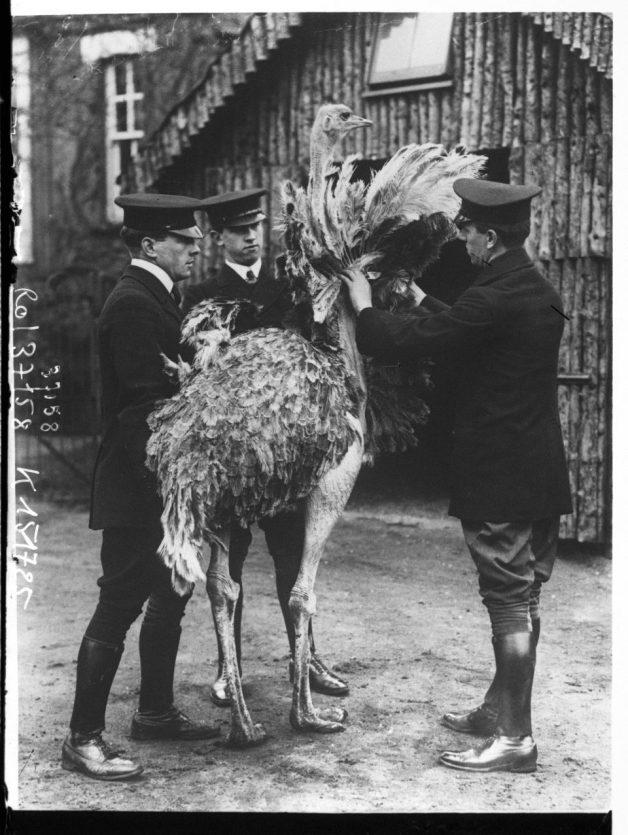 Pets-Mr-Wingfield-three-men-around-a-emu