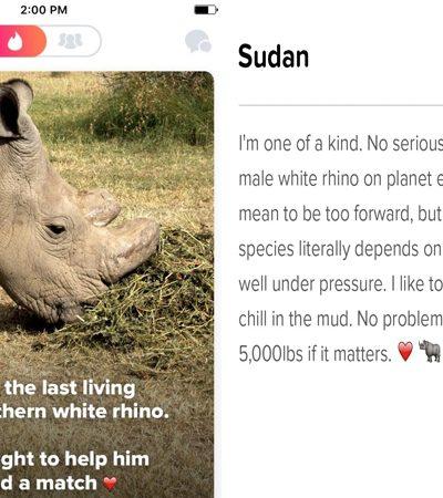 O último rinoceronte-branco do norte macho do mundo está no Tinder, a fim de salvar sua espécie