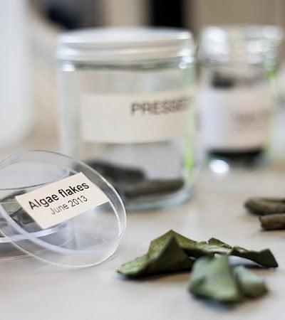 Projeto inovador usa algas para transformar CO² em biocombustível, fertilizante e comida para animais