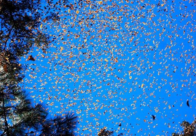 Ela captou em vídeo a fascinante dança das borboletas no rio Nhundiaquara, no Paraná