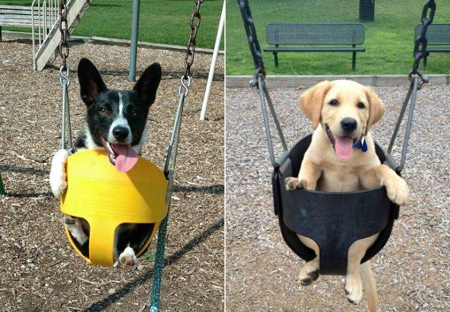 Impossível não sorrir com estes hilários balanços caninos