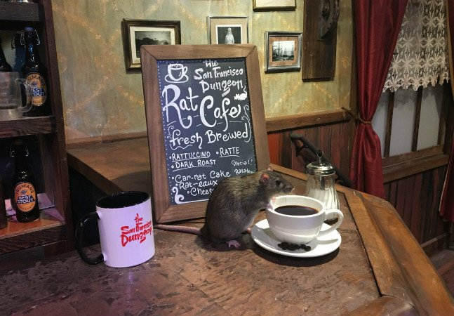 Sim, nesse café a sua principal companhia são os ratos – e isso na verdade é bom