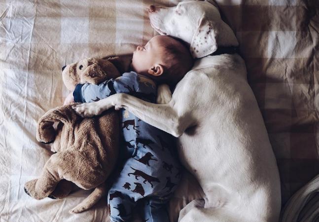 Cadela abandonada tinha medo de praticamente tudo; até conhecer esse bebê