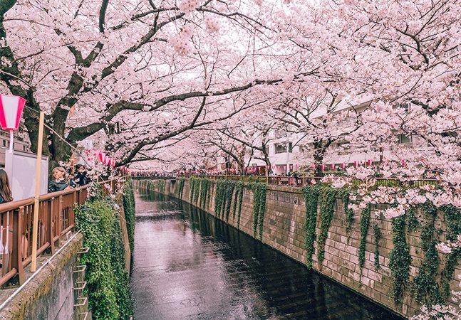 Fotógrafo capta a beleza natural das flores de cerejeira no Japão